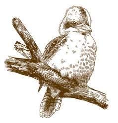 Engraving drawing of laughing kookaburra vector