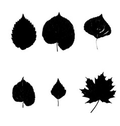 silhouette leaves of trees set vector image