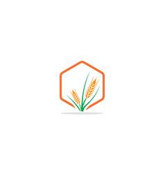 wheat plant tree logo vector image