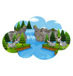 zebras in waterfall scene vector image