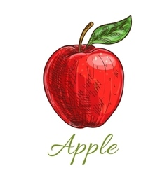 Fresh red apple fruit with leaf sketch vector image