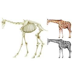 Giraffe and bone structure vector image