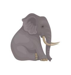 Big gray elephant sitting isolated on white vector