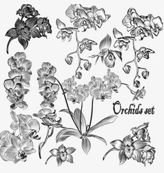 collection of detailed orchid flowers vector image