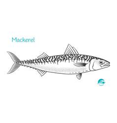 Mackerel hand-drawn vector