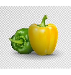 Realistic of sweet pepper 3d vector