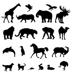 20 Animal Black Silhouette vector image vector image