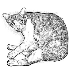 Laying down cat vector image vector image
