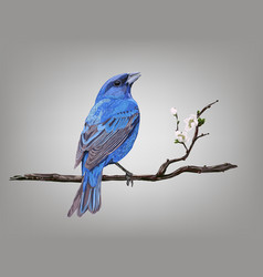 A croaking bird on a cherry blossom branch vector