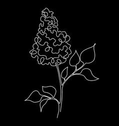 Black lilac vector