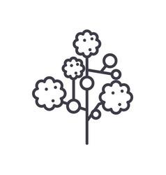 Gypsophila line icon concept flat vector