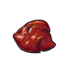 Pork raw liver offal sketch isolated vector