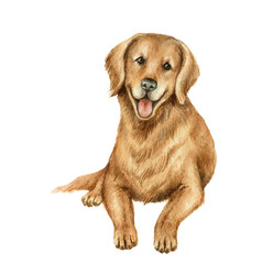 Watercolor retriever isolated on white vector