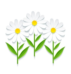 3d chamomile isolated on white background vector image vector image
