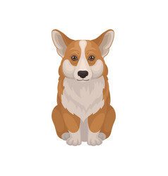 Detailed flat icon of cute welsh corgidog vector