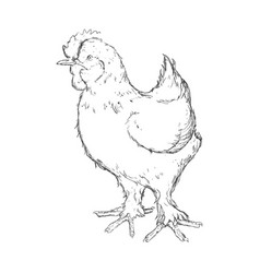 farm chicken hand draw vector image