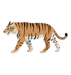 friendly predatory animal cute walking tiger icon vector image