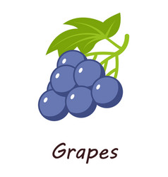 grape icon isometric style vector image