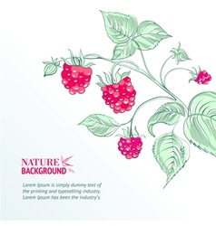 Raspberry watercolor vector