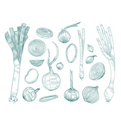 Collection of various whole and cut onions hand vector