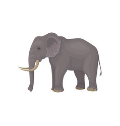 Gray elephant standing isolated on white vector