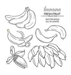 Banana fruits set vector