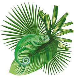 chameleon on tropical leaves white background vector image