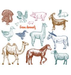 farm cute animal big set vector image