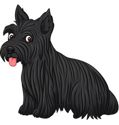 Scottish terrier dog breed vector