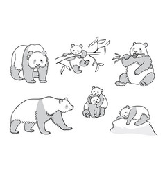 Set of pandas in outline vector