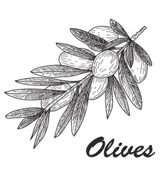 Black ink hand drawn olive twig vector