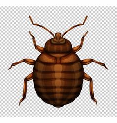 Brown bug on transparent background vector