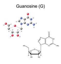 Chemical formula and model of guanosine vector image
