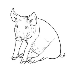 Drawing of pig vector image