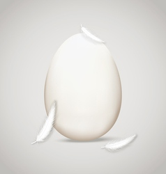 Egg in feathers vector image