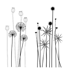 Collection wild plant poppies dandelion vector image