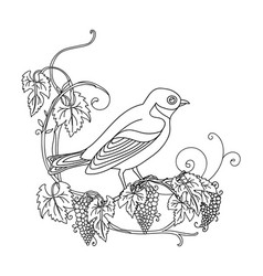 decorative little bird with grape vector image