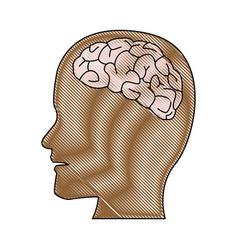 Human brain medical schematic anatomy vector