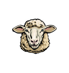 front view sketch portrait of domestic farm sheep vector image vector image