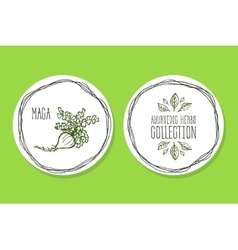 Ayurvedic Herb - Product Label with Maca vector image