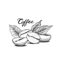 Coffee beans with leaves drink banner food vector