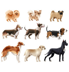 Dog breeds icon set vector
