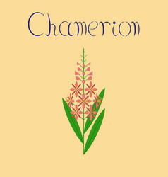 Flat on background herbal chamerion vector