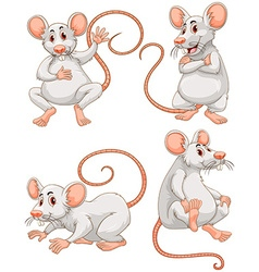 Mouse in four different actions vector image