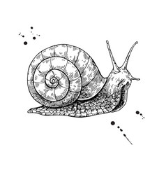 Snail drawing hand drawn isolated sketch vector