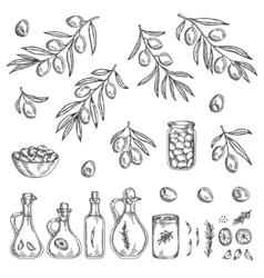 Hand drawn olive graphic set vector image vector image
