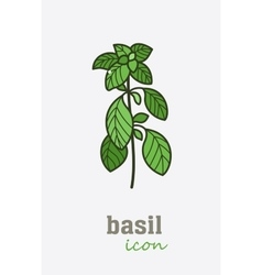 Basil icon Vegetable green leaves vector