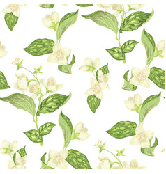 seamless pattern with jasmine flowers in vector image