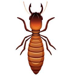Termite on white background vector