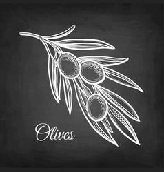 Chalk sketch of olive branch vector